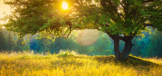 Country Meadow guided meditation - For rest and tranquility